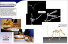 Projects - Pterosaur Fossil